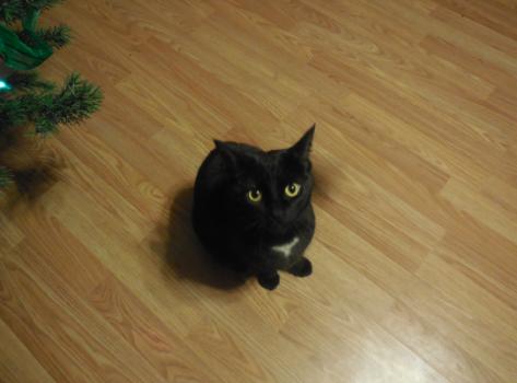 Bellatrix, the Cat by DragonflyLite